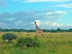 saadani-giraffe-(1-of-1)-(Large)