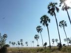 NEW-palms-1