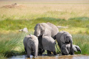 Serengeti - Elephants