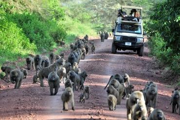 Vehicle in Ngorongoro