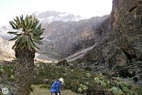 Machame Route + extra day scheduled trekking tour