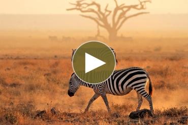 Safari mit Tanzania-Experience
