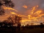 Serengeti-(1)
