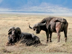 Tanz-and-Kenya-wildparks-(1-of-2)-2