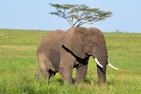 Camping Safaris