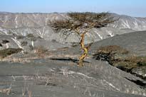 Ngorongoro Trekking