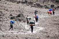 Lemosho Route private Trekkingtour