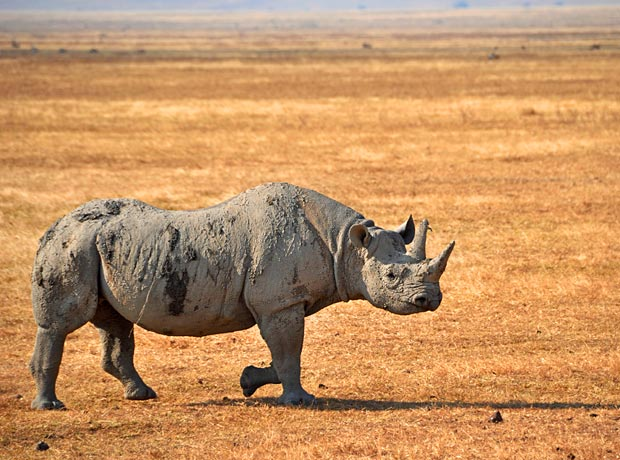 A-safari-guides-top-5-experiences-pic-2