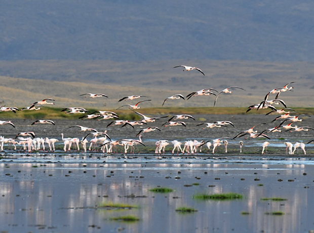 Lake Natron Tansania