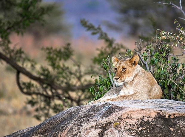 Wo Safari machen Tansania