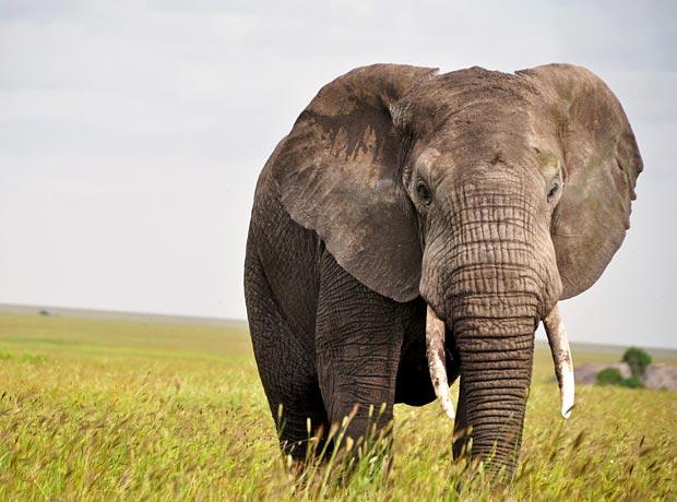 Serengeti in Tansania