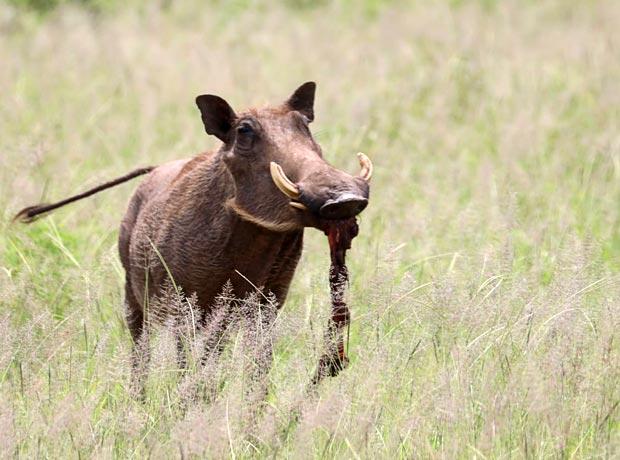 Wie verhalten sich Tiere in der Wildnis