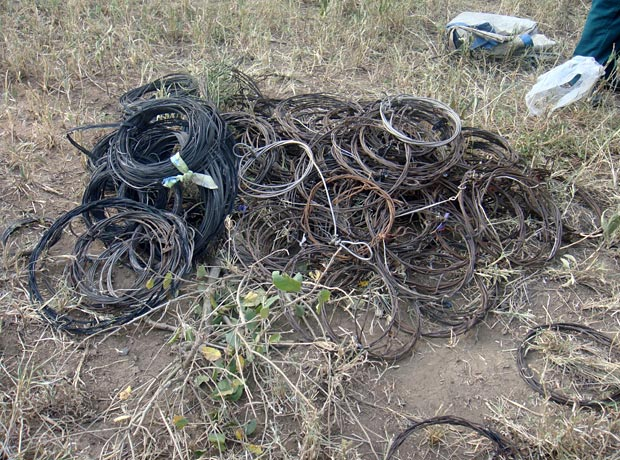 Wire snares poaching removed
