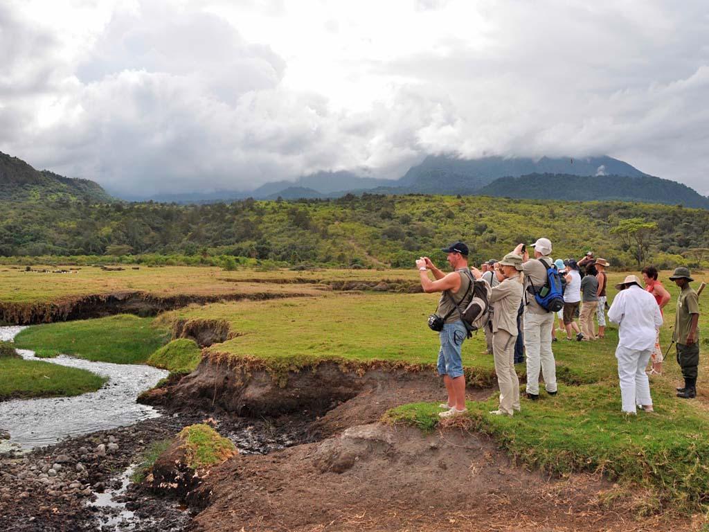 Africa Wildlife Tours