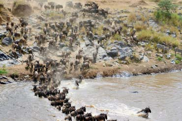 Migration Mara River