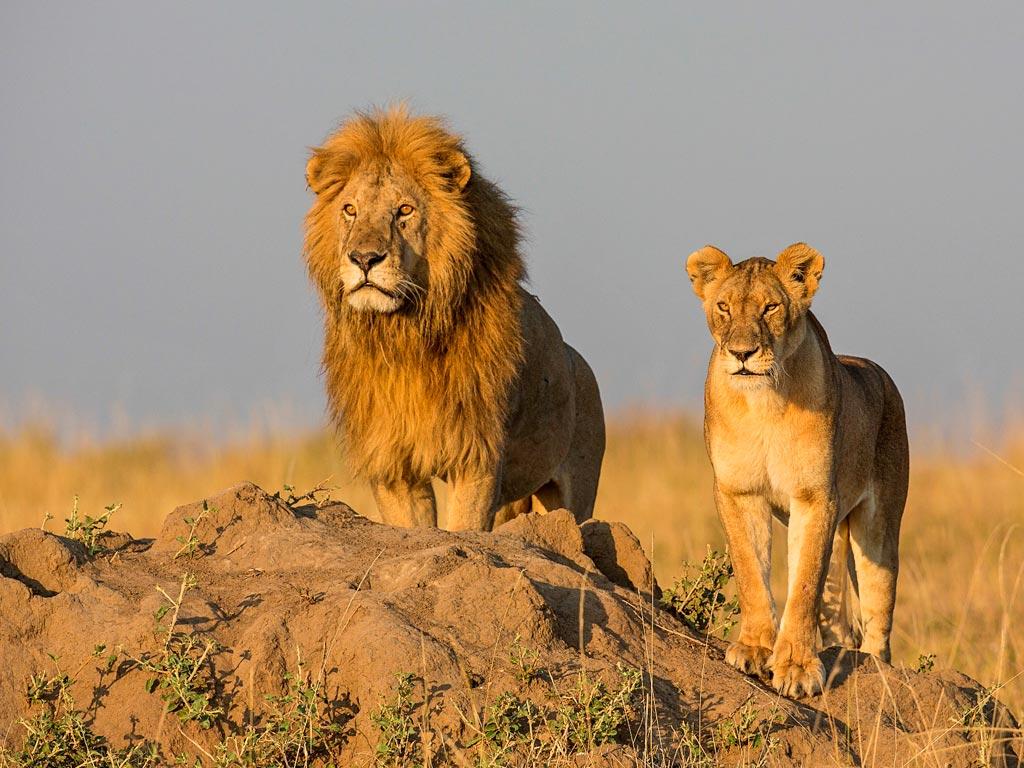 Fotolia_61749330_XXL & Tanzania Camping Safaris