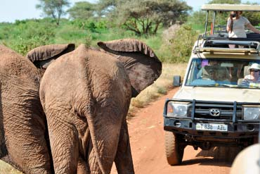 Daytrip Manyara National Park