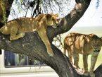 Serengeti-46