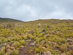 kilimanjaro-day-trip-gallery-5
