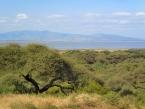 acacia-and-view