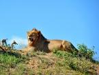 lion_hill