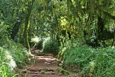 Montane rainforest Marangu