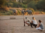 game-walk-at-Ruaha