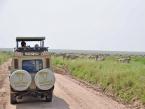 vehicle-serengeti