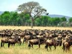 Ikoma_Serengeti_21SEP