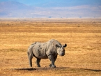 Rhino_2_Tanzania-Experience