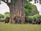 Elephants_4