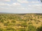 acacia-landscape