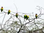 Love-birds-in-Tarangire-NP