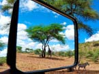 Tanz-and-Kenya-wildparks-(3-of-4)