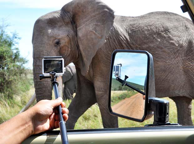Elephant Feedback