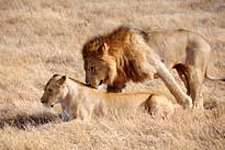 Fascination Tanzania Camping Safari