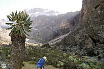 Machame Route + extra day scheduled trekking tour