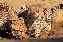Tanzania - Highlights of the South Camping Safari