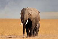 Tanzanias and Kenyas Wildparks Camping Safari