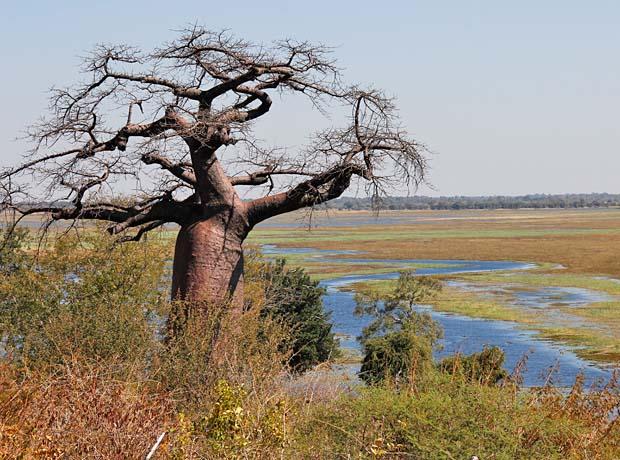 baobab2-(1-of-1)