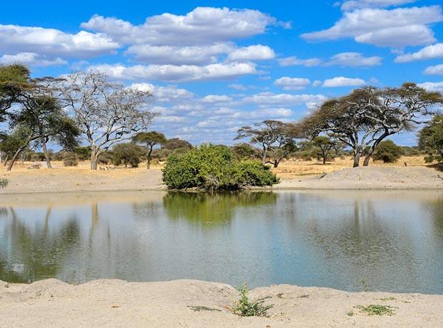 Water hole dry season tarangire tanzania