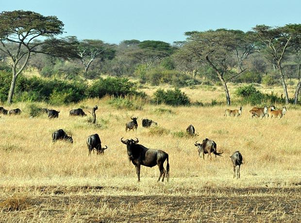 Travel Corona Safari